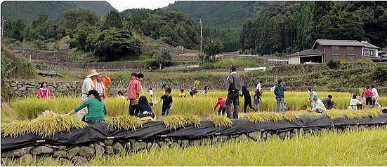 日本棚田100選の棚田での『稲刈り&芋ほり体験』参加者募集中(広報協力)の写真です
