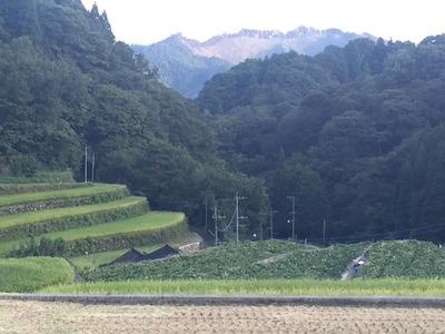 サツマイモ畑2.jpg
