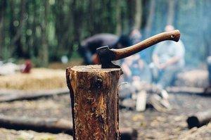 ワクワクドキドキ宝の山暮らし!『原木からしいたけを育ててみよう!第1回目原木伐採編』東峰村竹棚田・岩屋キャンプ場体験プロジェクト(広報協力)の写真です